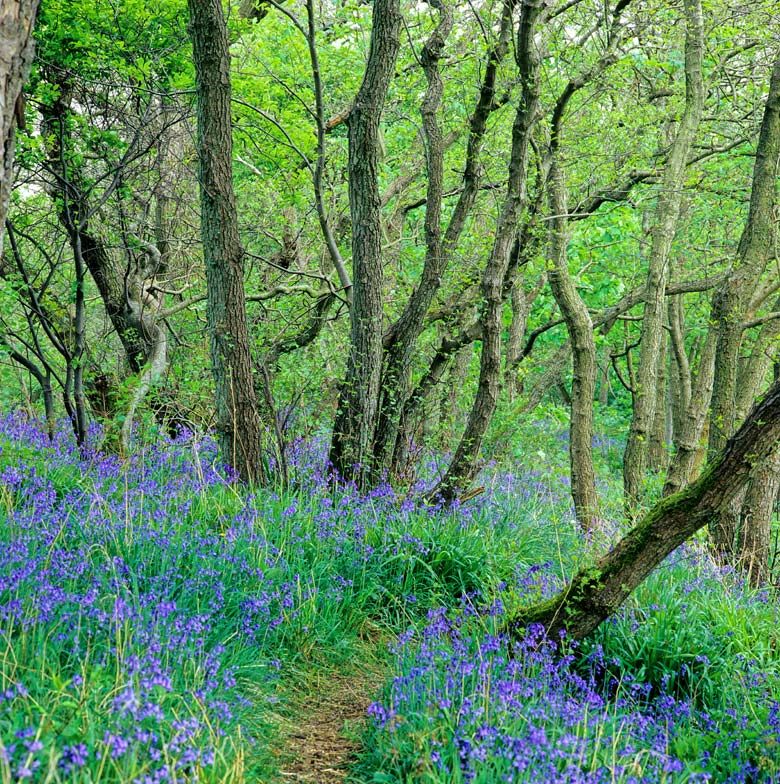 North Tynedale, Bluebells, Northumberland