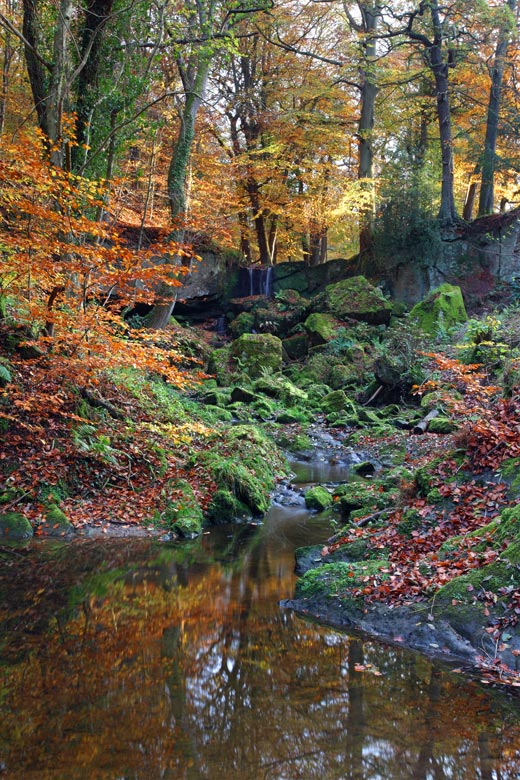 Old Mill Wood, County Durham